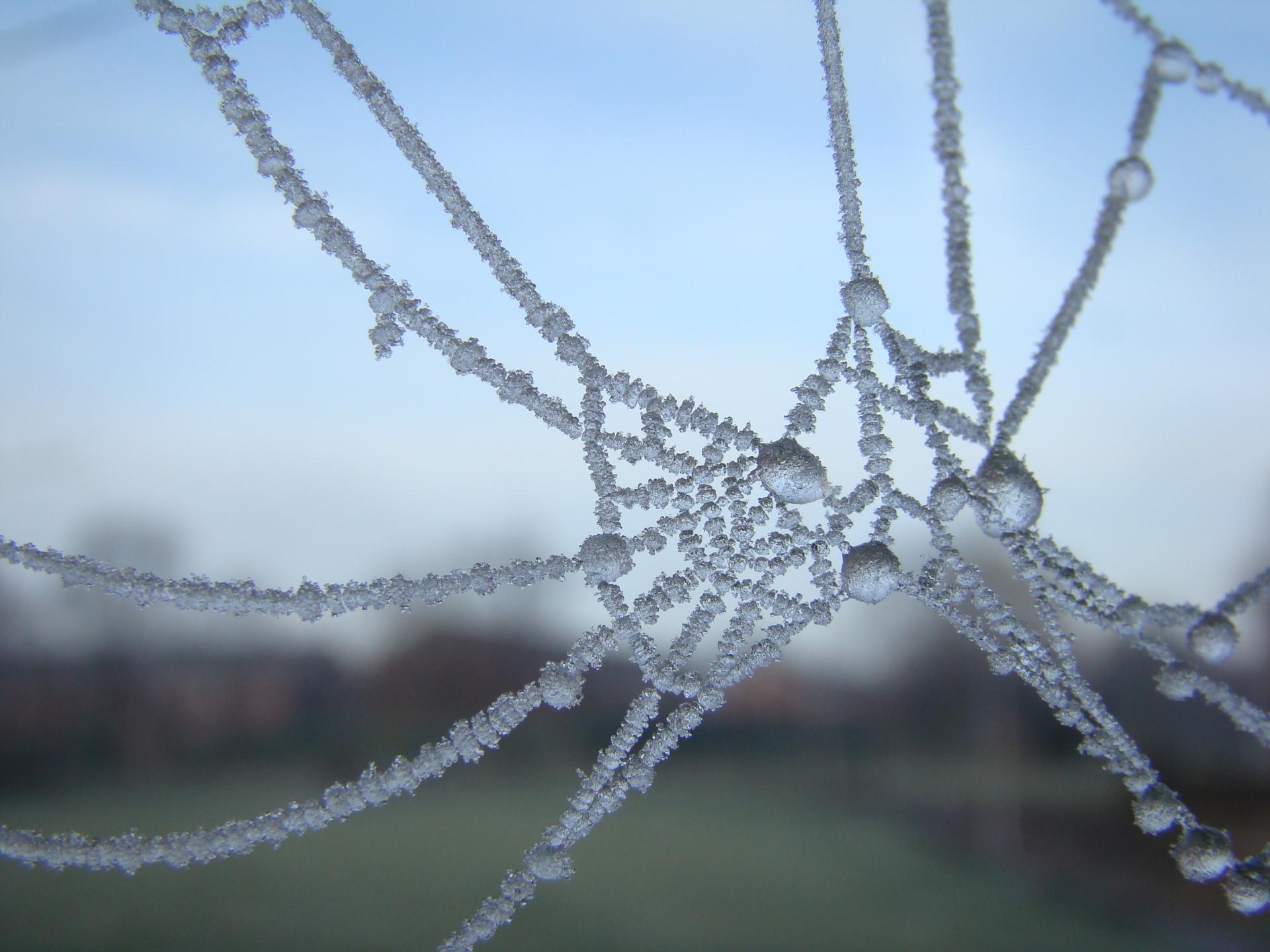 Ice Web